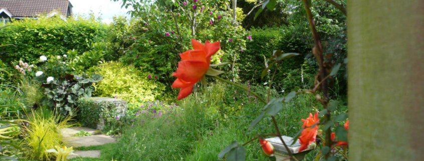 garden-number-6