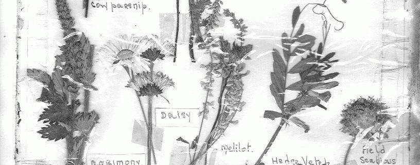 wild-flowers-3